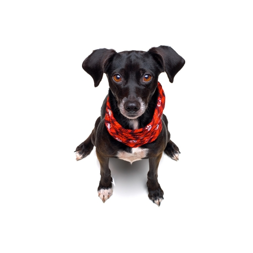 Doggy Loop snood red L