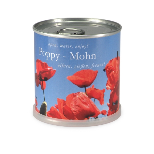 Flowers in cans - Poppy