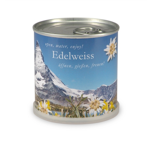 Flowers in cans - Edelweiss