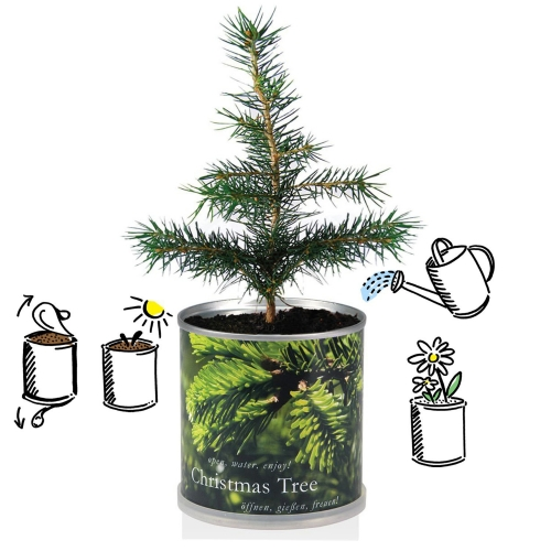 Flowers in cans - Christmas tree XM
