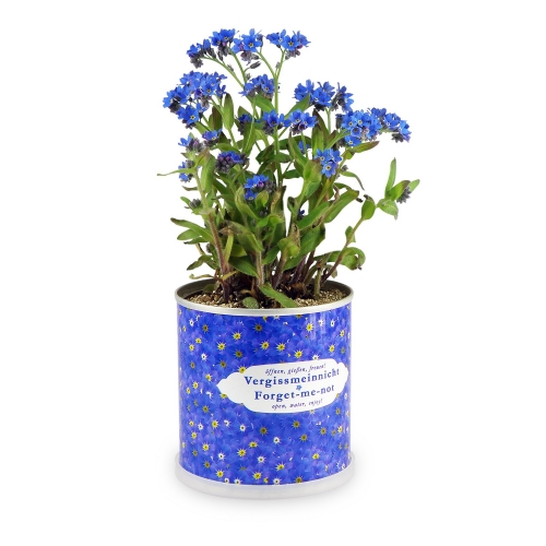 Flower can - Forget-me-not