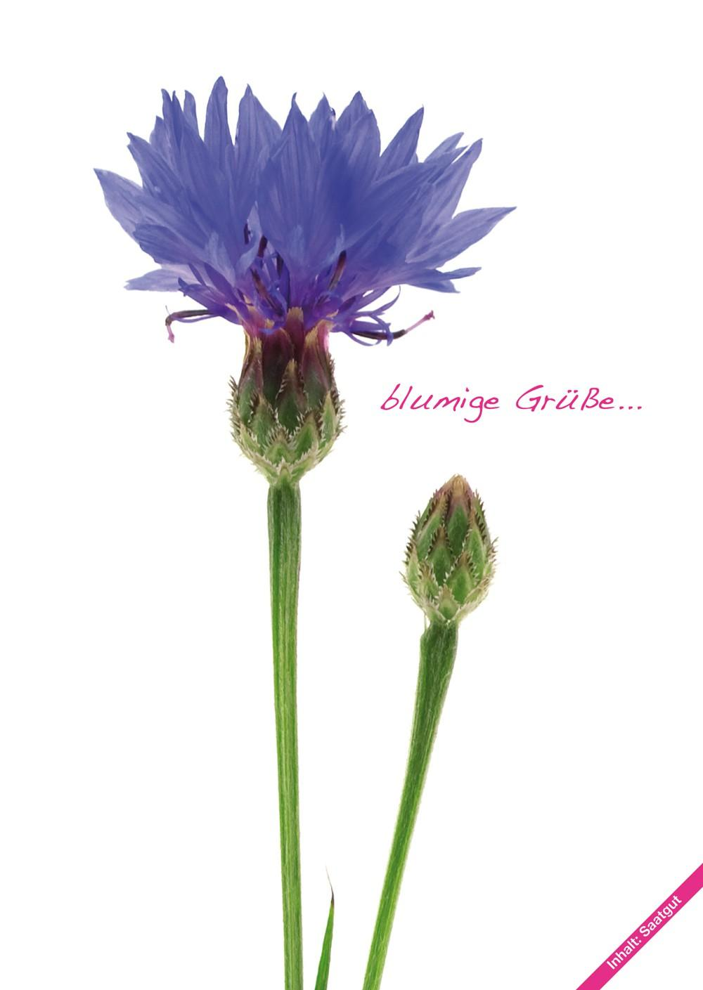 Fiorini seed postcards corn flowers, set of 10 pcs.