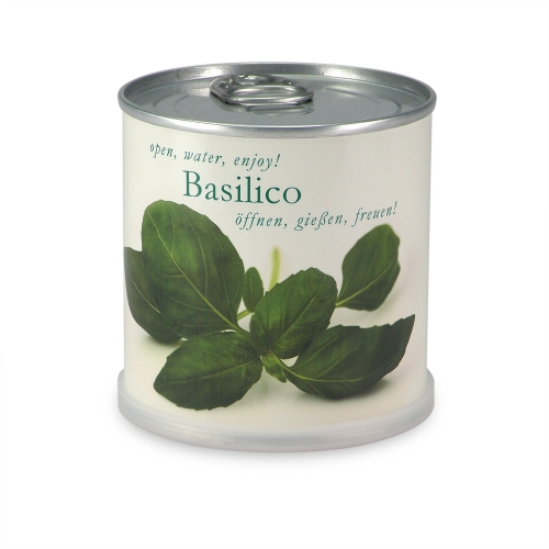 Flowers in cans - Basil