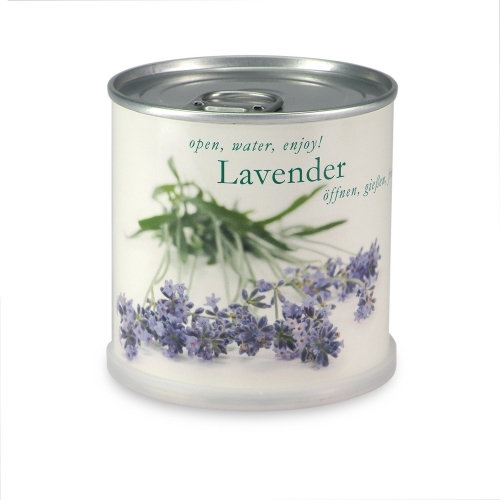 Flowers in cans - Lavendel